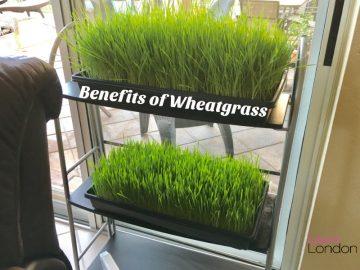 Wheatgrass Kits – How To Grow Wheatgrass At Home