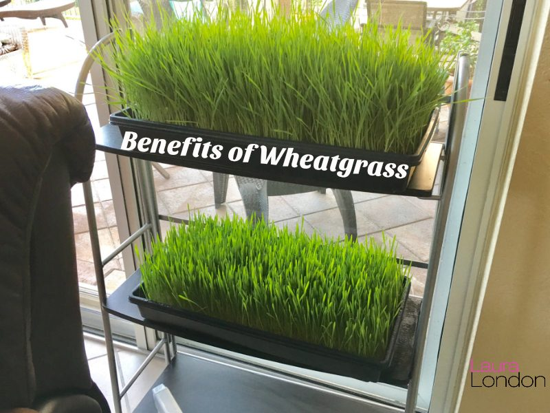 Wheatgrass kits
